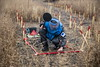 Clearance is a slow, painstaking process that is done metre by metre in a systematic manner ensuring that every inch of the site is checked. Progress is marked with red-painted sticks which delineates safe ground from unsafe ground.  © European Union/ECHO/Oleksandr Ratushniak