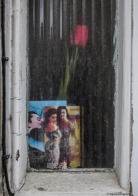 Tulips from Stepney Green ©