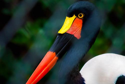 Bright Beak