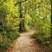 Autumn path #2