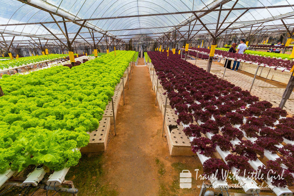 Organic cabbages and other vegetables