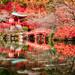 Daigo-ji in Autumn