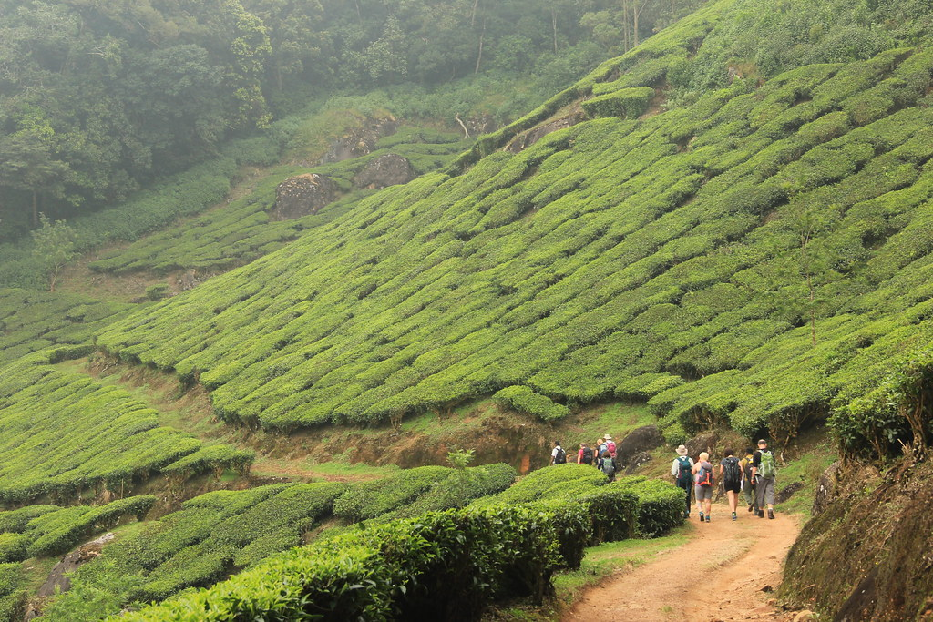 On our way back down to Munnar through the tea plantations