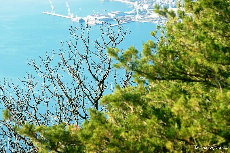 Куст можжевельника и Адриатическое море на заднем плане