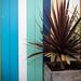 Stripes - LR6-310531-web