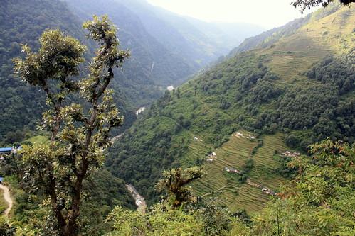 J24 : 14 octobre 2017 : 18ème jour du trek : de Chomrong (2210 m) à Siwar (1600 m) puis bus pour Pokhara