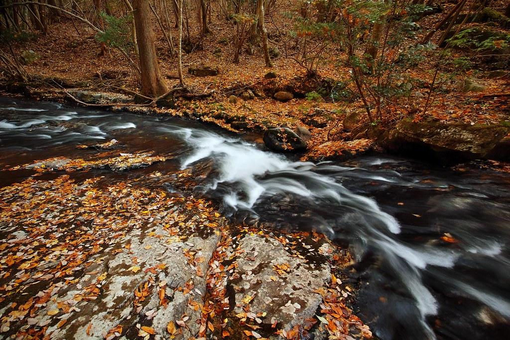 秋の渓流 #1
