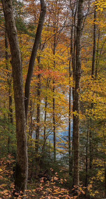 Fall in the Red River Gorge
