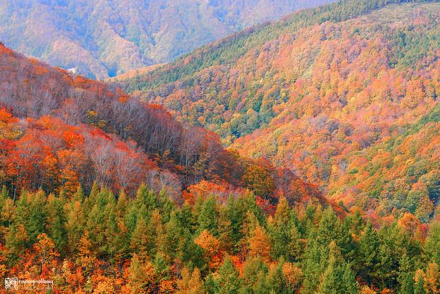 秋色是山巒中的一抹紅 | 09