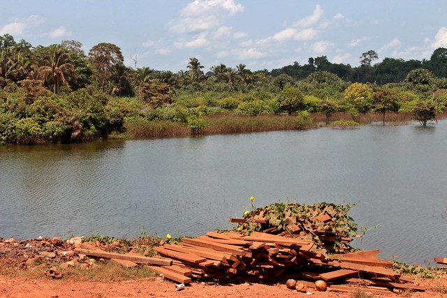 A presença indígena é a tábua de salvação da floresta