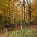 autumn panorama whippendell woods...