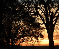 Sunset through the trees - Photo of Neulette
