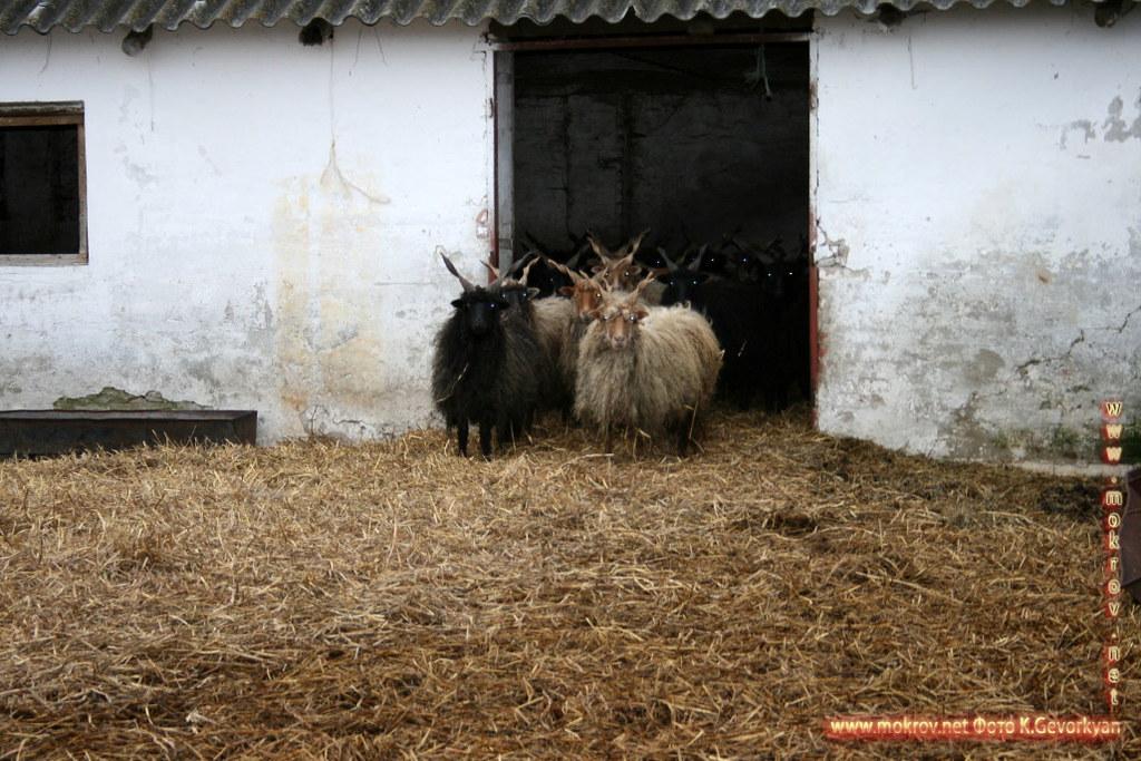 Конная Ферма Пуста  — Венгрия картинки