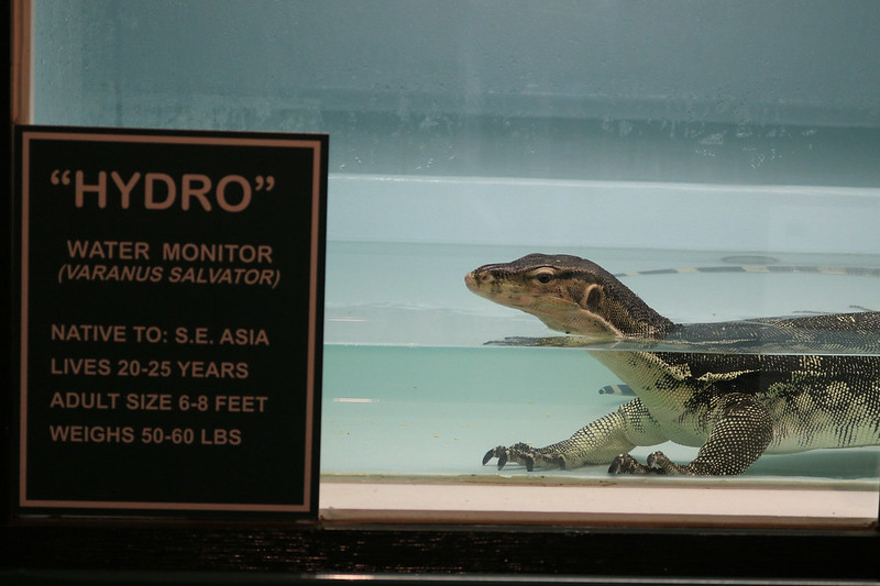 closeup of a tank holding a water monitor at the front looking left, a sign reading the name Hydro and vital statistics such as 6-8 feet, 50-60 pounds