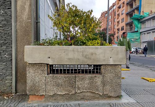У бетонной зеленогласки день не задался