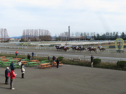 金沢競馬場の1コーナーに差し掛かる馬たち