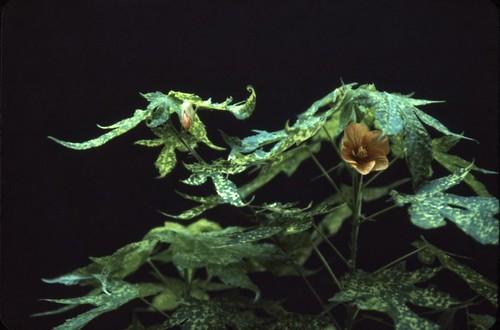 Flower - 1986