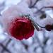 20171210 - Winter - DSC09173