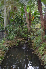 St Petersburg, FL - Sunken Gardens - Low Pond