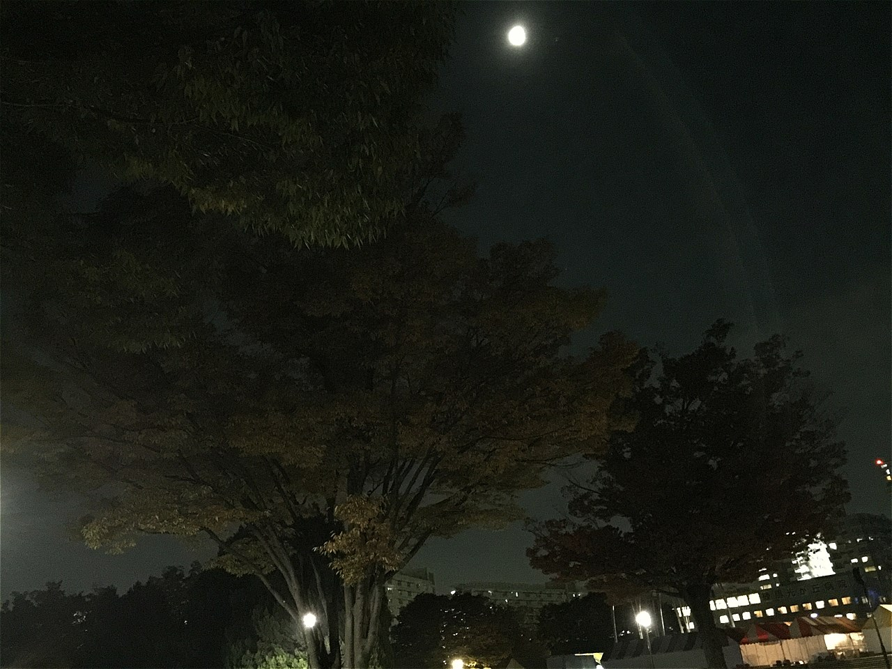 20171101_光が丘 (5)