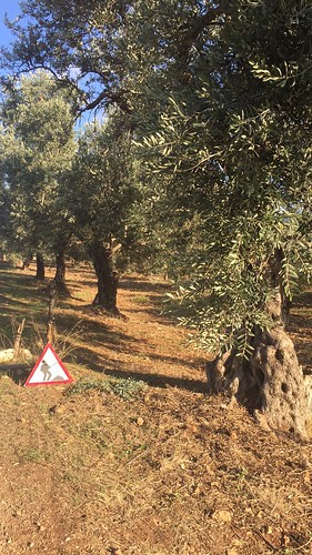 Olive Harvest Traffic Signs