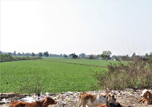 i-Chittor-bundi-route  (14)