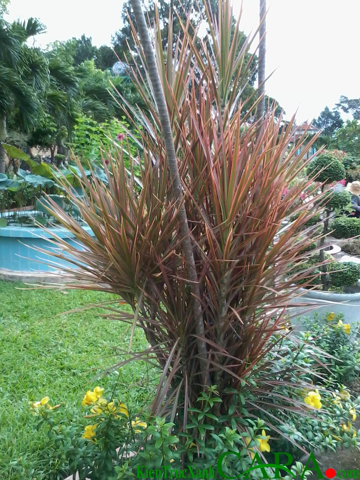 KIẾN TRÚC XANH CARA chuyên thực hiện các dự án xanh như thiết kế thi công các công trình xanh tiết kiệm năng lượng, sân vườn chuyên sâu, vườn ươm cung cấp hơn 300 loại cây xanh hoa cỏ và cây Bonsai khác nhau.
