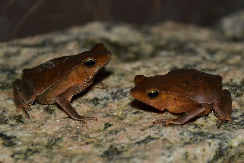 A pair of toads