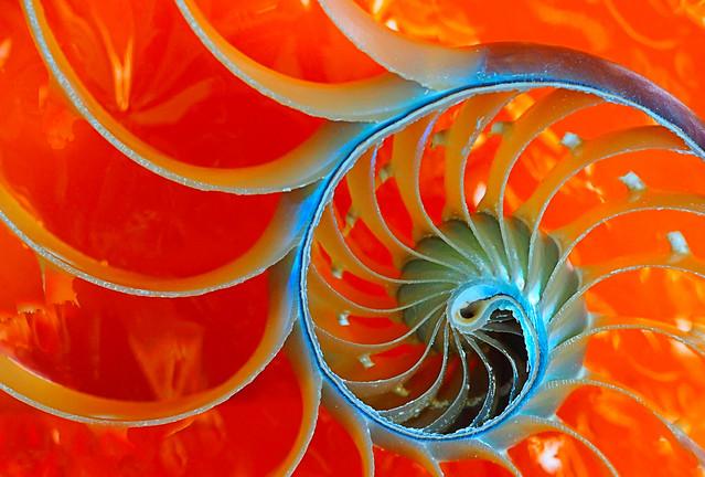 nautilus orange