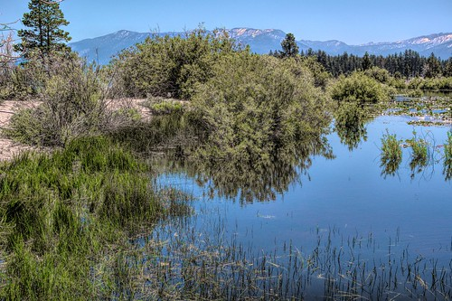 marsh baldwinbeach trees pond lake southlaketahoe snowcapped mountain eldoradocounty california beach sand pinetrees tree green blue joelach