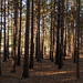 Winter on Horsell Common-EC080333