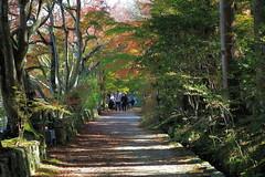 Photo:Fall colors at Choju-ji Temple (阿星山 長寿寺) By Greg Peterson in Japan