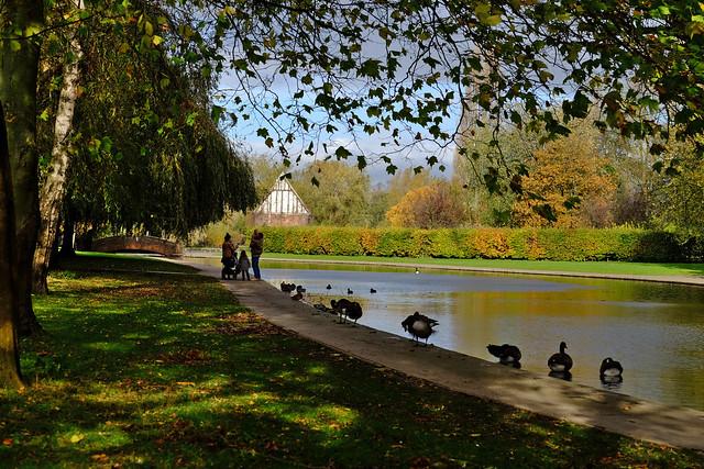 Ducks and Autumn Shadow