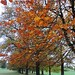 Autumn leaves at Wollaton Park