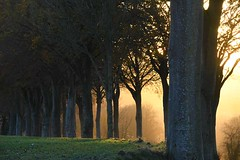 Sunset through the trees - Photo of Vieil-Hesdin