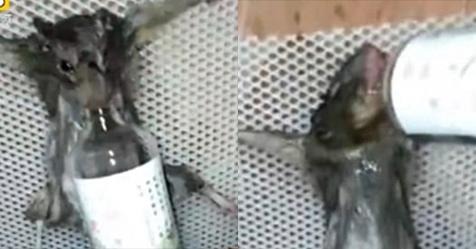 Chuột bị bắt uống rượu, thiêu sống vì ăn trộm bánh mì