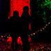 Christmas Glow RHS Wisley 02 December 2017 (51)