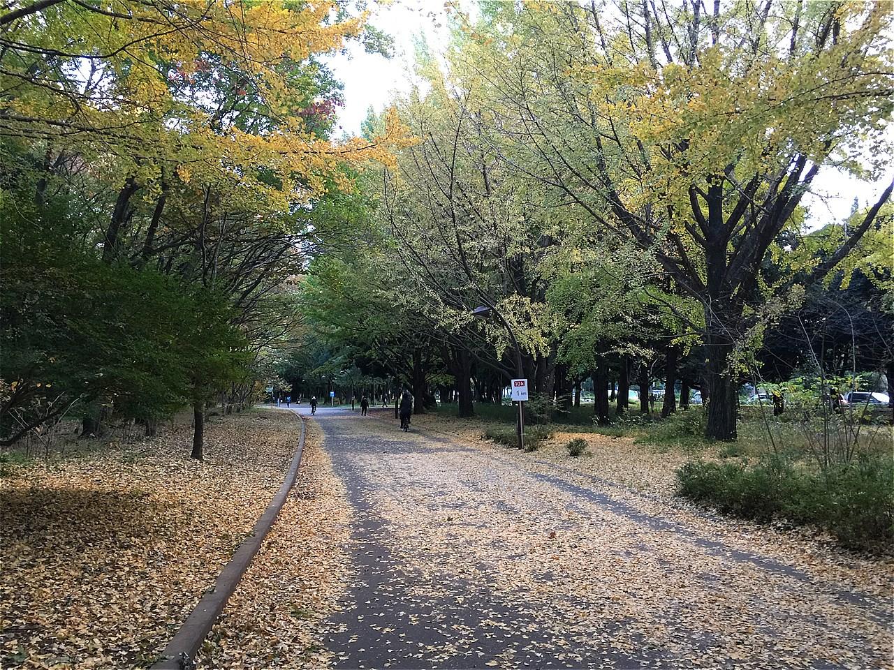 20171111_光が丘 (1)
