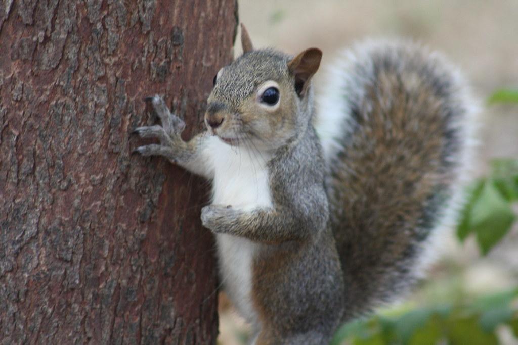 Squirrel Invasion 15