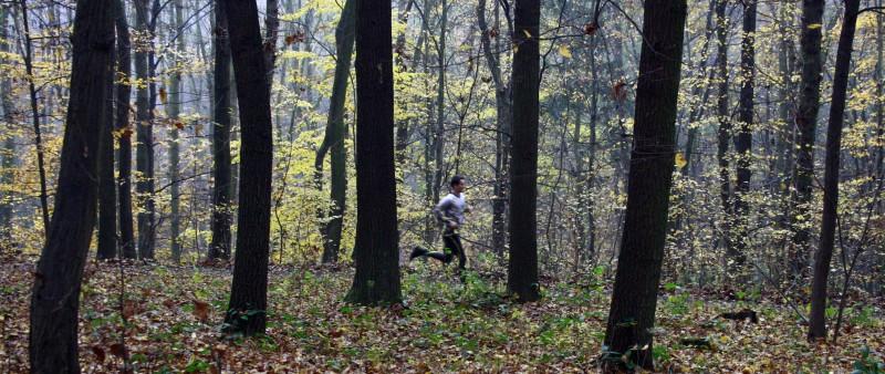 Podzimní běhání: Hurá do lesa