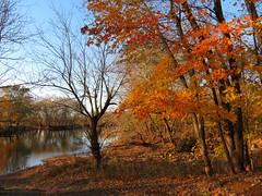 a little autumn remaining