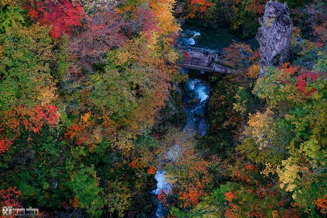 秋色是山巒中的一抹紅 | 33