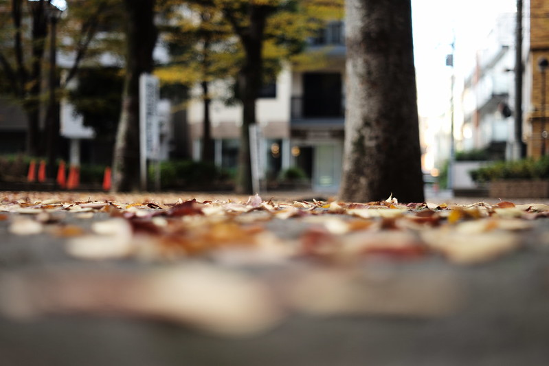 Leica M TYP240+Canon Serenar 50mm f1.8西池袋公園の紅葉