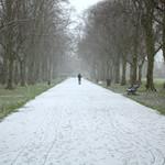 Snowy walkway at Haslam Park