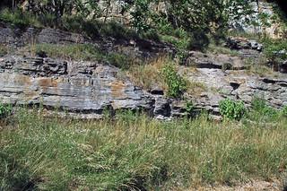 Fossil tree trunk (Kanawha Formation, Middle Pennsylvanian; Interstate 64 roadcut, Kanawha County, West Virginia, USA) 11