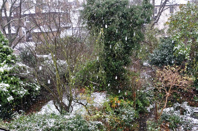 Snow fall in a london garden