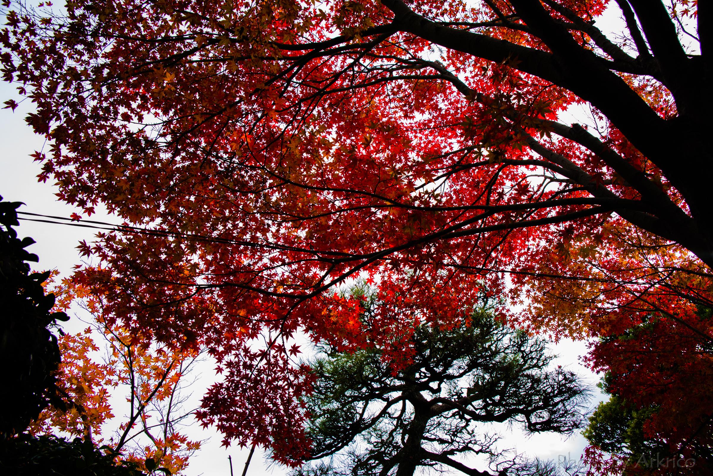 Autumn tints (4)