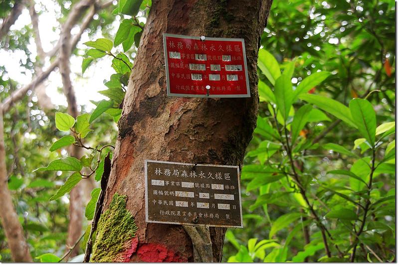 林務局森林永久樣區 1