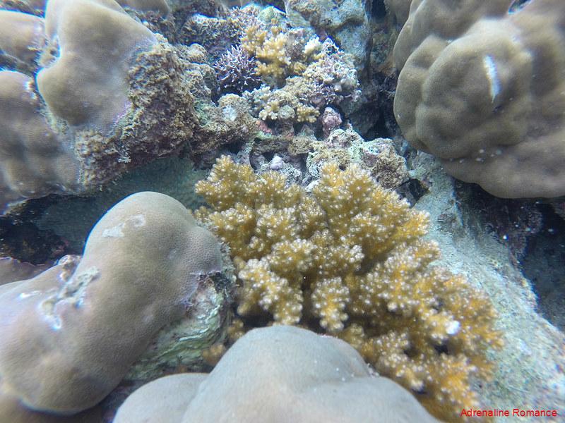 Corals at Pajo Marine Sanctuary