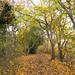 Autumnal Thames Path